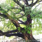 """Упражнение """"Большое Дерево"""". Когда нужна энергия"""